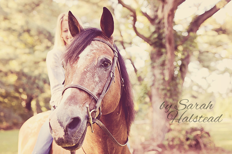 Horse Photography - Cisco