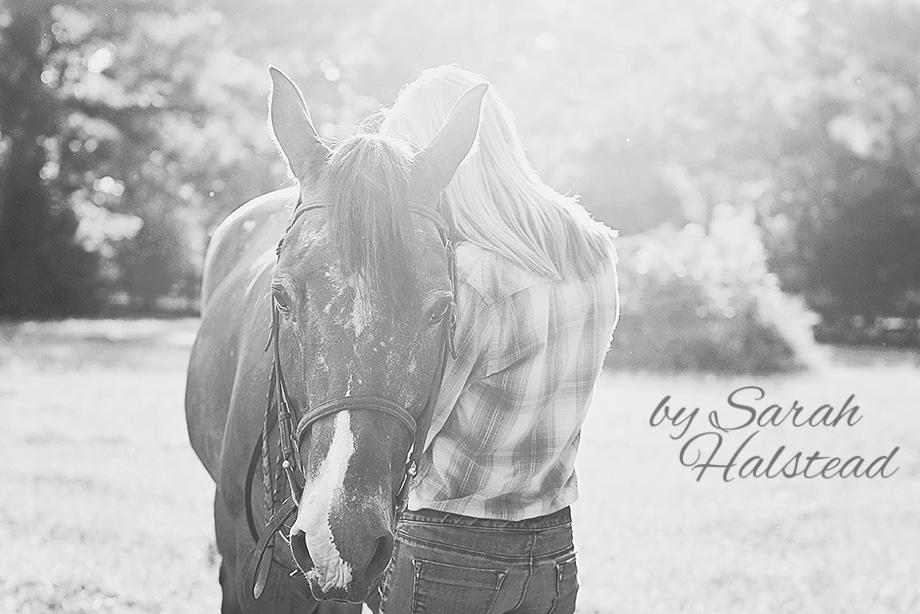 Horse Photography - Cisco