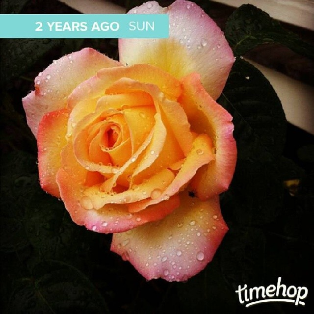 Yay. Time hop is on android now #timehop