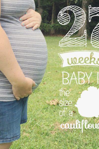 Life of Baby Halstead | Week #27