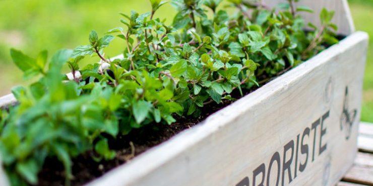garden-feature