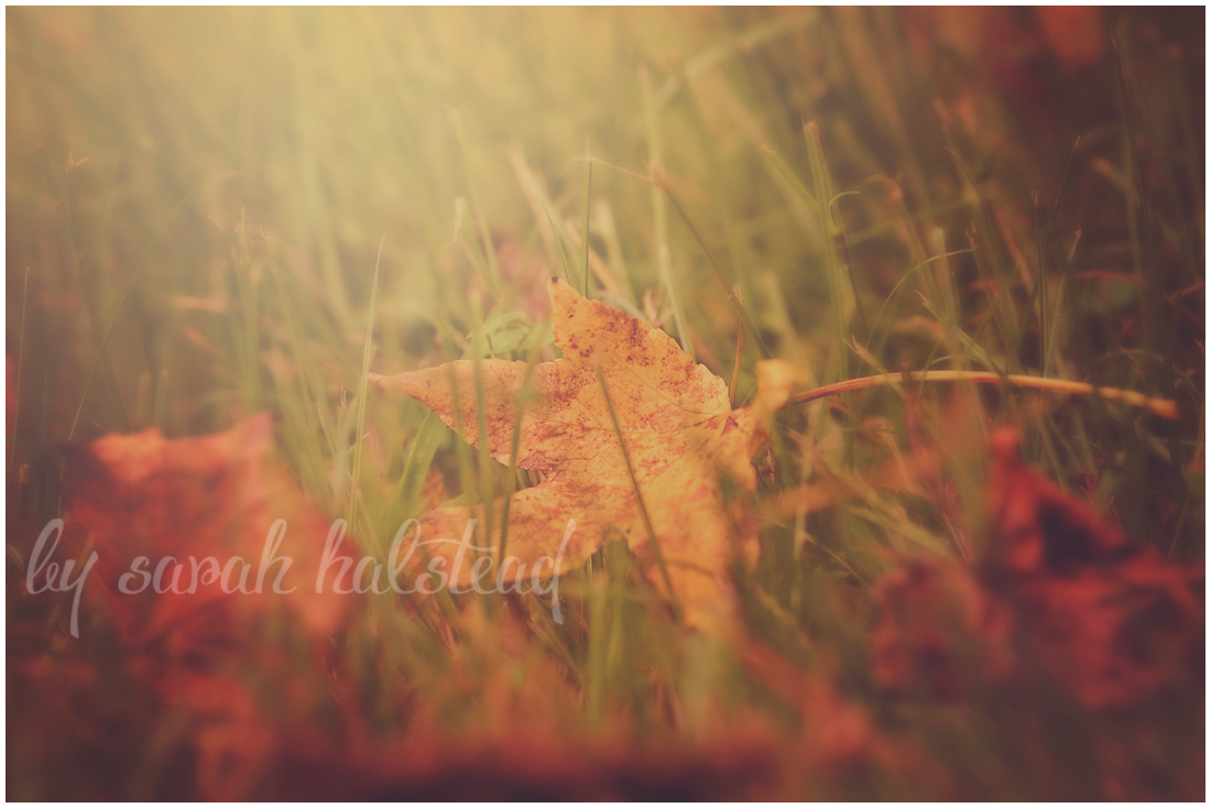 Memories, Dreams and Reflections | Autumn Harvest