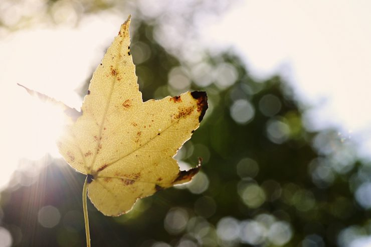 Fall Photo Scavenger Hunt